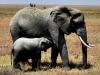 Elephants & Birds
